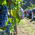 Wine-ing My Way Through Sicily